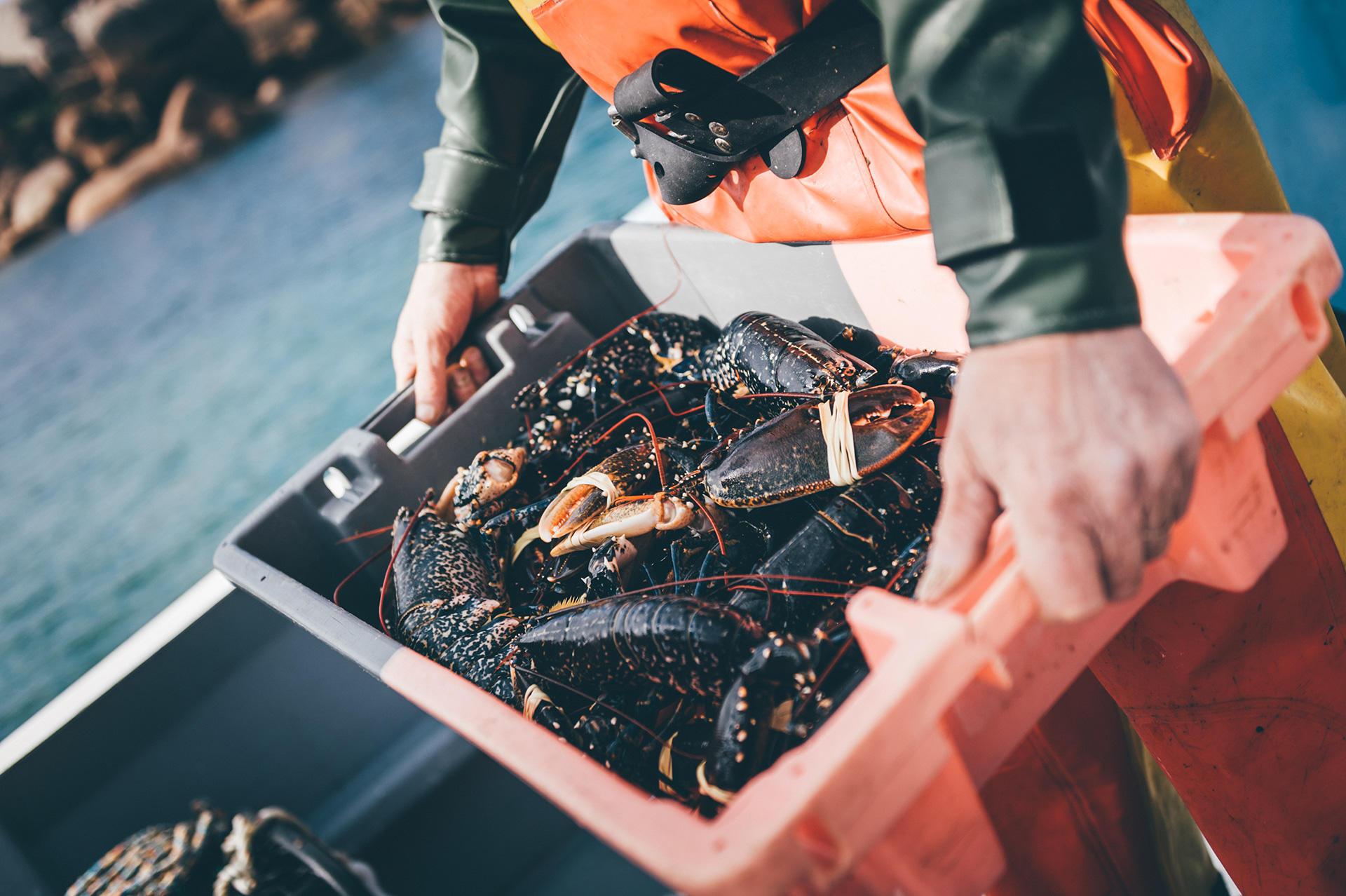 Homard breton pêché au casier