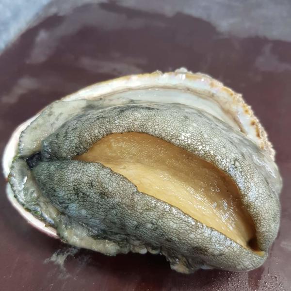 Ormeaux vivantsCoquille Saint-Jacques - Pêcheries le Levier